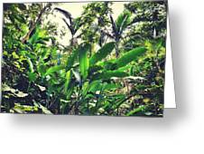 Heliconia Cluster Greeting Card