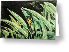 Heliconia Flower 7 Greeting Card