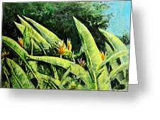 Heliconia Flowers 6 Greeting Card
