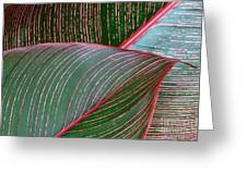 Heliconia Leaf Greeting Card