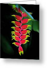 Heliconia Lobster Claw Greeting Card