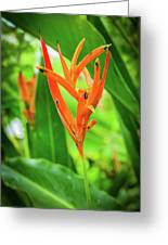 Heliconia Psittacorum Greeting Card