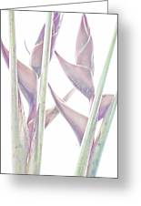 Heliconia Series - Image 1 Greeting Card
