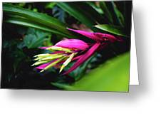 Heliconia Subulata - Wild Plant Series Greeting Card