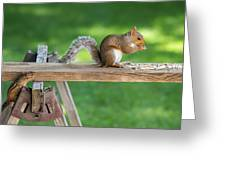 Hello Are You Gonna Eat All That? Chipmunk And Squirrel Greeting Card