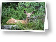 Hello From A Deer Greeting Card