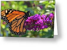 Hello Monarch Greeting Card