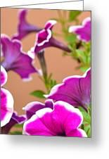 Hello Petunia Greeting Card