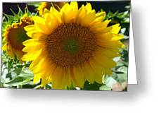 Hello Sunflower Greeting Card