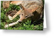 Hello Wolf Greeting Card
