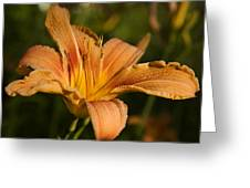 Hemerocallis Fulva Greeting Card