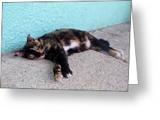 Hemingway Cat Greeting Card