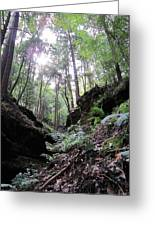 Hemlock Gorge Greeting Card