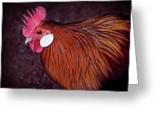 Hen Chicken, Digital Paint Greeting Card