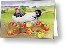 Hen In A Box Of Apples Greeting Card by EB Watts