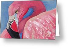 Henry - The Flamingo Greeting Card