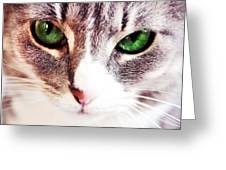 Her Emerald Eyes. Kitty Time Greeting Card