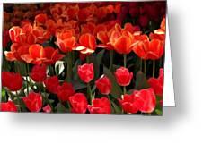 Heralds Of Spring Greeting Card