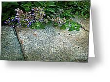 Herb Garden Walkway Greeting Card