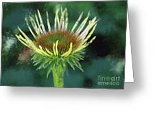 Herbaceous Beginning Greeting Card
