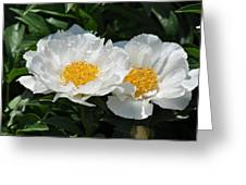 Herbaceous Peony 1 Greeting Card