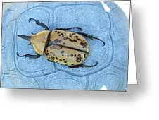 Hercules Beetle Greeting Card