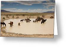 Herd At A Waterhole Greeting Card
