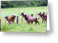 Herd Of Elk Leaping - Western Oregon Greeting Card