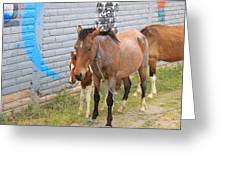 Herd Of Horses On A Street Greeting Card