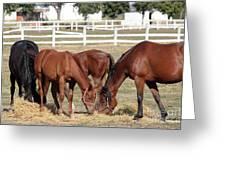 Herd Of Horses Ranch Scene Greeting Card