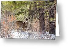 Herd Of Mule Deer In Deep Snow Greeting Card