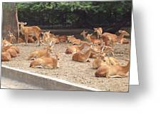 Herd Of Stags. Greeting Card