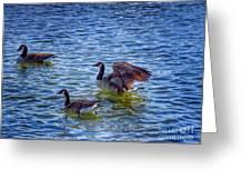 Herding Geese Greeting Card