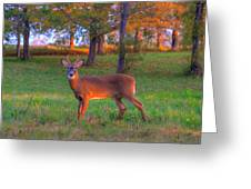 Here And Gone Greeting Card