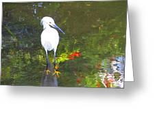 Here Fishy Greeting Card