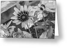Here I Am In Black And White Greeting Card