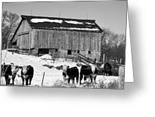 Hereford Barn Bw Greeting Card