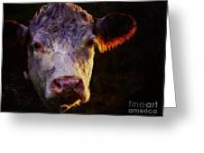 Hereford Cow Greeting Card