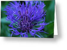Here's Looking At Bluet Greeting Card