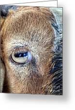 Here's Looking At You Kid - The Truth About Goats' Eyes Greeting Card