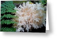 Mushroom Hericium Coralloid Greeting Card