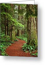 Heritage Forest 2 Greeting Card