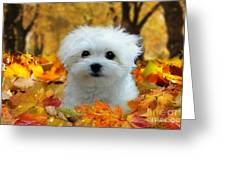 Hermes In The Fall Greeting Card