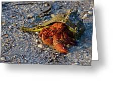 Hermit Crab- Florida Greeting Card