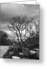 Hermit Island Tree 0192 Greeting Card