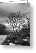 Hermit Island Tree 0912 Greeting Card
