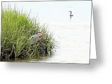 Heron And Cormorant Greeting Card