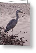 Heron And Grey Water Greeting Card