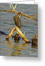 Heron And Turtle Greeting Card