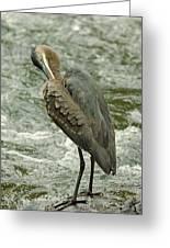 Heron At The River Greeting Card